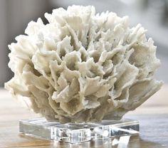 White Coral Bring the Sea and a Snowy Feel to Holiday Decor