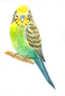 watercolor parakeets | Saturday, March 10, 2012