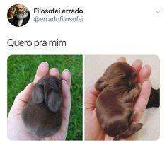 Soft bunny, warm bunny, little ball of fur~ Cute Baby Animals, Animals And Pets, Funny Animals, Dankest Memes, Funny Memes, Memes Status, Pinterest Memes, Little Pets, Love Pet