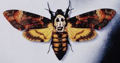 Silence of the Lambs : Mash up between the Deaths Head Moth and Salvador Dali