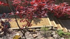 Japanese influenced area with Acer palmatum, rocks & moss Acer Palmatum, Bespoke Design, Planting, Garden Design, Rocks, Japanese, Landscape, Flowers, Custom Design