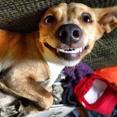 Woof of the Week Instagram Winner: Show Us Your Teeth