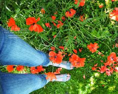 Photo Print - Walking in Poppies #etsyfollow #brigteam #spring #summer #blossom #flower #nature #botanical #home #wall #decor #poppy #field #green $26.00 by @Yuliya