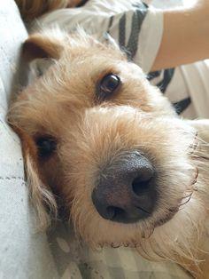 My Photos, Dogs, Animals, Animais, Animales, Animaux, Pet Dogs, Doggies, Animal