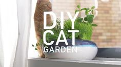 Learn how to plant a cat garden and fill it with herbs your cat will love.