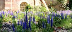 Przetacznik kłosowy to bylina długo kwitnąca o kłosowatych kwiatach. Green Garden, Garden Plants, Flowers, Gardening, Tops, Lawn And Garden, Royal Icing Flowers, Flower, Florals
