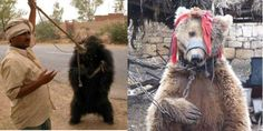 HELP ME...Stop bear dancing! PLEASE SIGN N SHARE...PLEASE HELP STOP THESE BASTARD SCUM 'HUMANS' FROM DOING THIS!!!