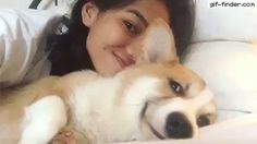 Corgi Enjoys Cuddles | Gif Finder – Find and Share funny animated gifs