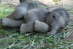 Adorable baby Elephant, click thru for other cute baby pictures