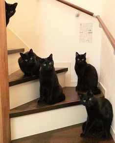 Pin by Tweeting Truman on Cats Black Cats Cats, Cats