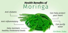 Moringa is rich in vitamins, minerals, and amino acids. It contains significant amounts of vitamins A, C, and E; calcium; potassium; and protein.