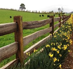 Image result for rustic horse fencing