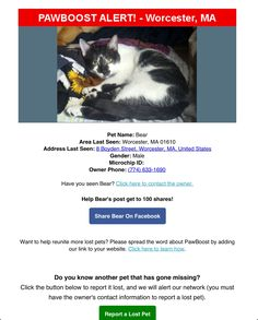 Lost Cat Named Bear: Worcester, MA Cat Names, Worcester, Lost & Found, Bear, Cats, Gatos, Bears, Cat, Kitty