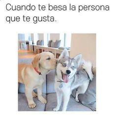 Kisssssss #memes #chistes #chistesmalos #imagenesgraciosas #humor www.megamemeces.c... ➢➢ http://www.diverint.com/imagenes-divertidas-biblioteca