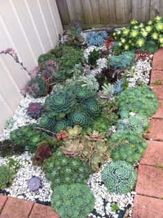 10 Succulent Garden Ideas, Most of the Incredible and also Attractive Succulent Rock Garden, Succulent Landscaping, Succulent Gardening, Cacti And Succulents, Planting Succulents, Garden Landscaping, Planting Flowers, Propagating Succulents, Outdoor Plants