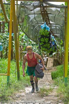 Banana plantation near Limon, Costa Rica   Patrick J. Endres