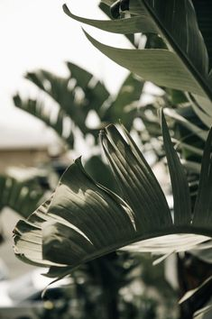 Surfrider Malibu — M. Plant Aesthetic, Nature Aesthetic, Beige Aesthetic, Aesthetic Backgrounds, Aesthetic Iphone Wallpaper, Aesthetic Wallpapers, Photo Wall Collage, Picture Wall, Grand Cactus
