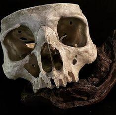 Sugar Skull Decor, Sugar Skull Art, Crane, Zombie Style, Skull Reference, Real Skull, Human Skull, Crystal Skull, Vanitas