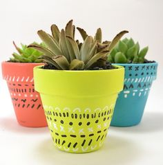 Plant pot diy, Succulent pots, Decorated flower pots, Painted flower pots, Garden crafts diy, Diy flower pots - Dude I am so into succulents right now There is such an AMAZING variety down here in my - #Plantpot #diy