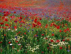 food for my bees Pretty Flowers, Wild Flowers, Trust, Local Parks, Love Garden, Garden Borders, Flower Boxes, Garden Inspiration, Spring