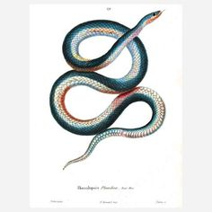 Blue Snake Print now featured on Fab.