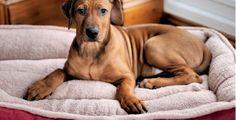 ¿Cómo quitar el olor de la orina del perro y las manchas?