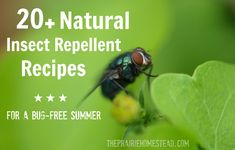 20+ Natural Insect Repellent Recipes for a Bug-Free Summer | The Prairie Homestead