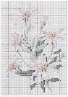 Australian Wildflowers • 7/19 Silver-leafed Daisy