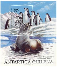 ENLARGE Antartica Chilena, State Quarters, First Day Covers, Fauna, Stamp Collecting, Postage Stamps, Animal Crossing, Birds, History