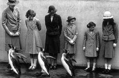 people + penguins