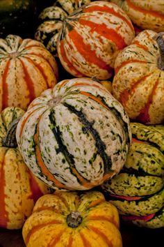 Pumpkin Art - Pumpkins by Robert Ullmann Green Pumpkin, Pumpkin Art, Harvest Time, Fall Harvest, Fruit And Veg, Fruits And Veggies, Fall In Michigan, Pumpkin Squash, Fruit Photography