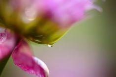 Image result for dewdrop people flickr Morning Dew, Vegetables, People, Image, Veggie Food, Vegetable Recipes, Veggies, Folk