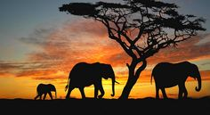 Image result for elephant silhouette painting