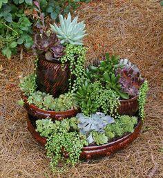 plantes succulentes dans un mini jardin décoratif