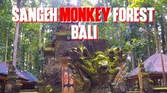 Sangeh Monkey Forest Bali - One of recommended monkey forest in Bali for visit.