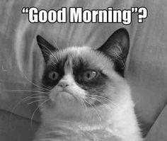 Good morning ? #cat #funny #grumpy