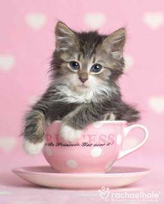 Jasmine (Domestic) - Jasmine Is my cup of tea (pic by Rachael Hale)