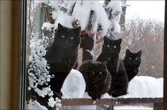 Isn't it about time you let us in? #blackcatsinthesnow