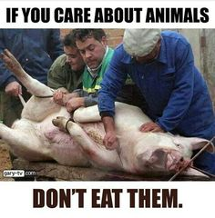 Oh the terror in that poor animals eyes. Please go vegan