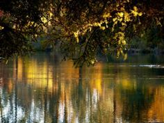 Reflection of fall foilage