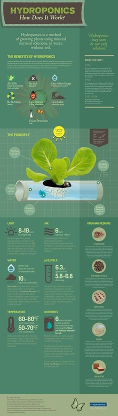 Hydroponic Gardening Basics: Learn All About This Gardening Method Here! http://homeandgardenamerica.com/basics-of-hydroponic-gardening #hydroponicgardening #hydroponicgardeningideas #gardeningbasics