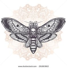 death head moth - Google Search