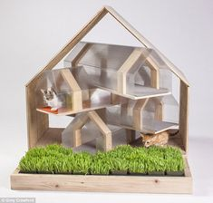 The cat's meow: The HOK cat shelter is a modernist, pentagonal structure which creates two...