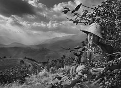 Sebastião Salgado chronicles and celebrates coffee growers Coffee picker. Lushi Tropical Economical Crops Development Company, Mengnai village Lujiang valley, Baoshan District, Yunnan province, China 2012. ©SEBASTIAO SALGADO/AMAZONAS IMAGES FOR ILLY