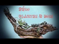 Déco Plantes & Bois