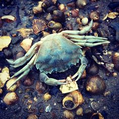 Døden i fjæra.. - @monelill- #webstagram