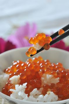 Japanese Food Ikura Don, Salmon Caviar over Rice|いくら丼