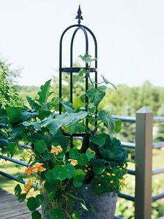 An interesting idea for growing vining veggies or flowers in a container.