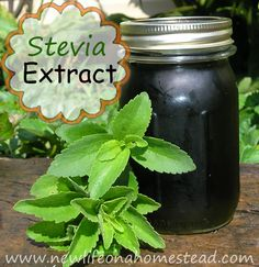 How to make stevia - add it to tea rather than sugar. Stevia helps with balancing blood sugars. Herbal Remedies, Home Remedies, Natural Remedies, Cocina Natural, Preserving Food, How To Make Homemade, Canning Recipes, Real Food Recipes, Herb Recipes