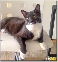 Read Billy's story the Tuxedo from Long Island City, New York and see his photos at Cat of the Day http://CatoftheDay.com/archive/2014/March/02.html .